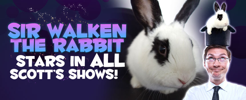 Sir Walken, the Rabbit Stars in all Scott's shows!